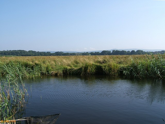 South Drain, Wareham