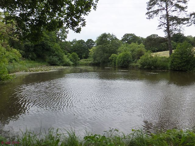 Pete's ('the Saxon') Ponds