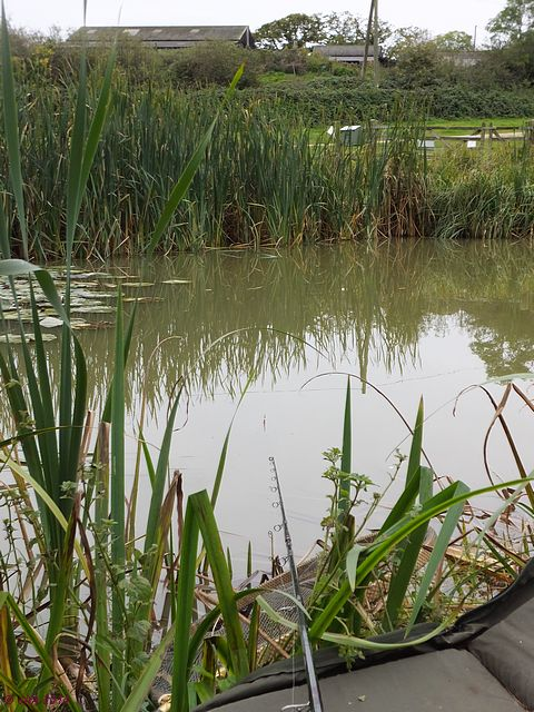 Lower Sharnhill goldfish pond