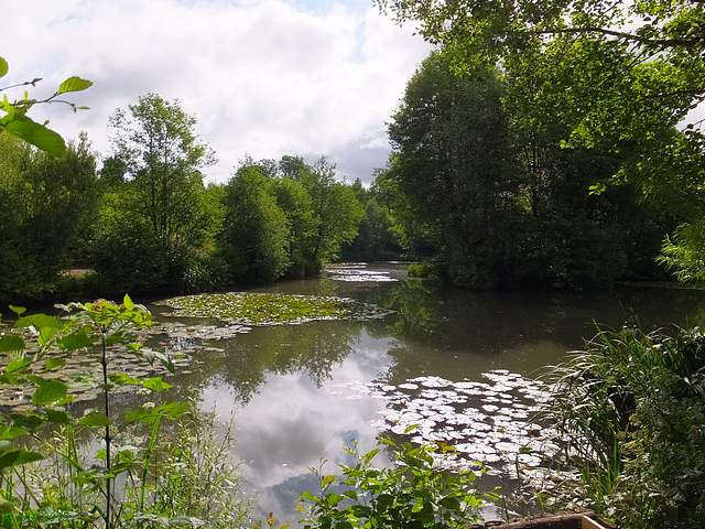 Pond near Mayfield