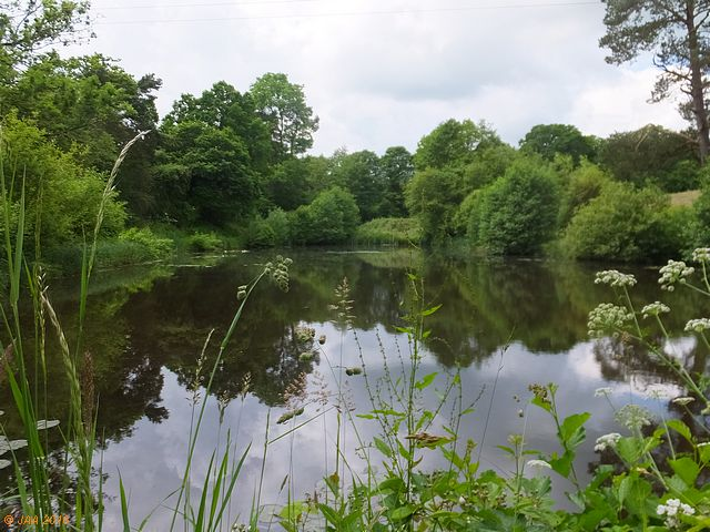 Pete's Ponds, lower.